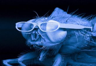 060328_fly_glasses_big.jpg