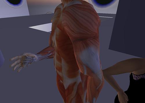 anatomicalavatar.jpg
