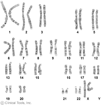 karyotype_female.jpg