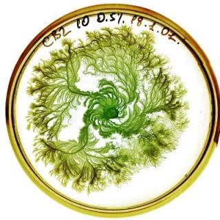 petri-dish-1.jpg