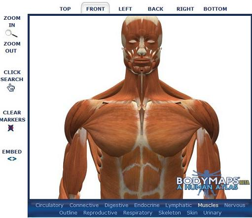 bodymaps.jpg