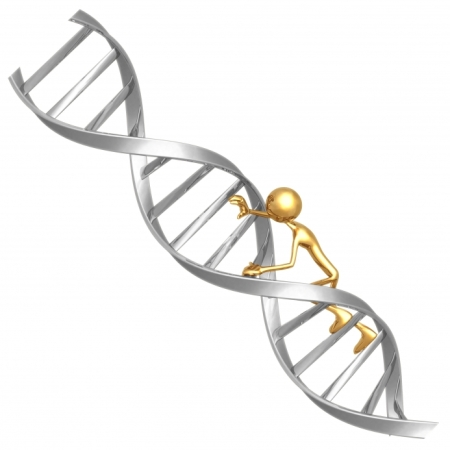 dna-ladder